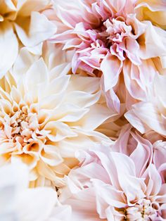 Pale Dahlias 1 | Photography by Brittany Ambridge