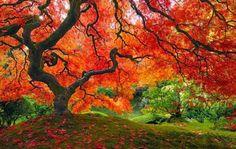 Algumas das mais belas e incríveis árvores do mundo | Curto e Curioso