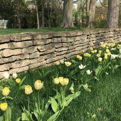 Spring time in Columbus #tulips #springflowers #springbloom #flowers #plantnerd #perennial #gardendesign #gardendesigner #gardening #gardens #gardener #gardeners #plantnerd #gardenstyle #hage #haver #jardim #Jardin #hortus #trädgård #Tuinen #庭 #园 #tuin #garten #plantporn #gardenlife