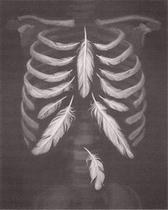 Feathers & rib cage ... juxtaposition