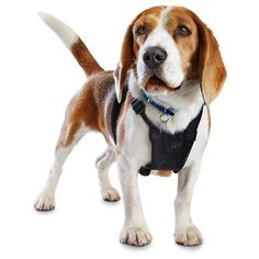 Good2Go Black No Pull Dog Harness >>> Check out the image by visiting the link. (This is an Amazon affiliate link)