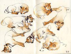 Shiba Inu watercolor Speed art, Here! Animal Sketches, Animal Drawings, Art Drawings, Illustrations, Illustration Art, Shiba Inu, Speed Art, Akita, Creature Design