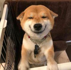 Funny Animal Videos, Cute Funny Animals, Cute Baby Animals, Animals And Pets, Silly Dogs, Funny Dogs, Cute Puppies, Cute Dogs, Corgi Puppies
