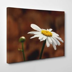 Canvasprints.io | White Camomile Flower - #canvasprintsio - Low cost, high quality canvas prints made in London UK from just £13.99. You're sure to find inspiration in our collection. Ask about our photo to canvas option too, it's super simple. Canvas prints on wall / flower and floral canvas art