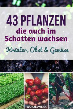 43 Kräuter-, Obst- und Gemüsearten, die auch im Schatten wachsen. Du hast einen Schattengarten und fragst dich, welche Pflanzen du anbauen kannst? Hier ist eine Liste von Pflanzen, die auch in einem schattigen Gemüsegarten wachsen! #Garten #Wurzelwerk #Gemüsegarten