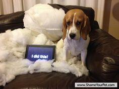 Shame Your Pet | Dog Shaming • Cat Shaming | Shame Your Pet