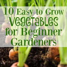 See this awesome list of easy to grow vegetables for beginner gardeners and learn which plants are best to start growing first!