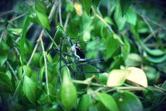 Grasshopper... (by Kami) 1.6.2009