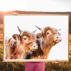 The Twins: Original Fine Art Print Nursery Prints, Wall Art Prints, Fine Art Prints, Horse Print, Cow Print, Modern Prints, Modern Wall Art, Highland Cow Art, Office Lounge