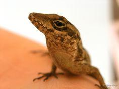 Lizard by Rodrigo Cornejo on 500px