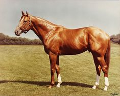 Secretariat, God's perfection of an athlete!