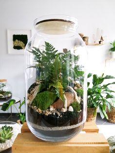 Las w słoiku forest in jar plants Lasy, Plants In Jars, Wedding Gifts For Groom, Moss Terrarium, Vivarium, Small Gardens, Go Green, Forests, Houseplants