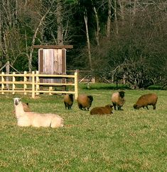 If you are unsure of which livestock guard animal to choose for your place, let's take a look at the possibilities of a guard llama. Although either females or Llama Llama Duck, Funny Llama, Llama Alpaca, Funny Animal Facts, Funny Animals, Raising Cattle, Farm Dogs, Mother Earth News, Mini Farm
