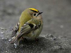 Courrier - Isabelle Deblois - Outlook Cute Birds, Pretty Birds, Small Birds, Colorful Birds, Little Birds, Beautiful Birds, Animals Beautiful, Bird Pictures, Animal Pictures