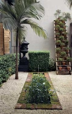 Courtyard garden bed...  leads the eye upwards, and round towards the palms tree - the plant pots on a ladder adds instant green height.