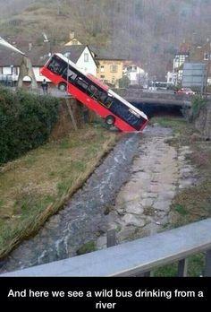 The elusive wild bus.