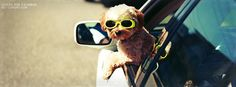 Cool Dog Facebook Covers