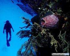 Caribbean: scuba diving