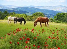 Horse-riding in Tuscany, Italy