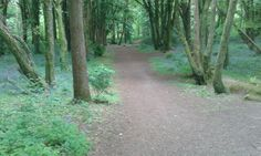 See 6 photos and 1 tip from 17 visitors to Ballyannon Woods. 6 Photos, Country Roads, Wood, Plants, Woodwind Instrument, Timber Wood, Trees, Plant, Planets