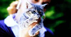 Daily Awww: Kitty cat cuteness (22 photos)