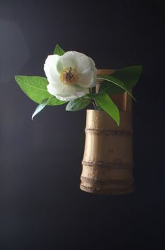 Prometheus: Chabana (tea flower) In this instance, a gorgeous Stewartia pseudocamelia bloom. Arrangements Ikebana, Floral Arrangements, Japanese Flowers, Japanese Art, Flower Tea, Flower Vases, Love Flowers, Beautiful Flowers, Sogetsu Ikebana