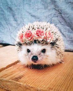 Animals day 18 pics #animals #cute #cuteanimals