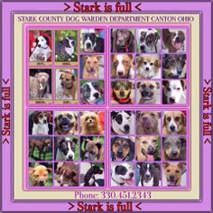 CANTON, OHIO URGENT! SHELTER FULL!!!! PLEASE RESCUE/SPONSOR/ADOPT!!!!! http://starkdogs.org/
