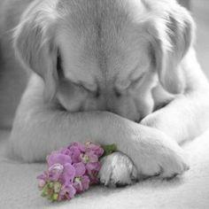 Looks like a prayerful pup.  Ooooh, sweet!