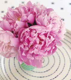 Beautiful pink peonies 🌸