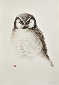 Hawk Owl by Karl Mårtens - Litografier « Edition Vulfovitch
