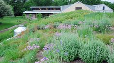 Learn more about the Morris Arboretum's Rooftop Gardens. These Platinum LEED certified buildings feature a selection of xeric (drought resistant) plants from High Country Gard…