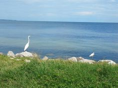 Mama Longneck Water Bird and her Baby: Longneck Water Chicklet