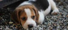 Αποτέλεσμα εικόνας για σκυλάκια μικρά