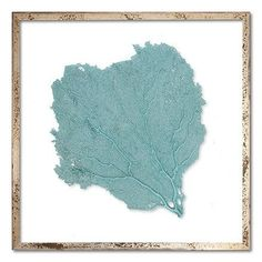"""Square Classic Sea Fan Framed Wall Art - 24"""" x 24"""" from The Well Appointed House"""