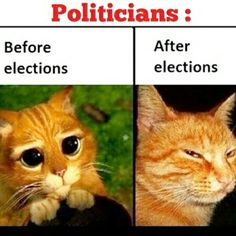 politicians, before and after elections Top Memes, Dankest Memes, Funny Memes, Funny As Hell, The Funny, Stupid Funny, Australian Politics, Humor Grafico, Funny Stories