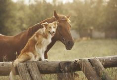 """We often hear the question: """"Can I use essential oils on my animal?"""" Our answer: absolutely! Learn how to safely use essential oils for dogs, cats, and other pets Are Essential Oils Safe, Young Living Essential Oils, Horse Pictures, Funny Animal Pictures, Diy Dog Shampoo, Best Treats For Dogs, Horse Quotes, Horse Sayings, Cowboy Quotes"""