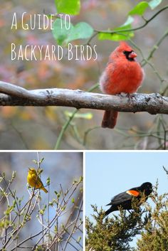 Our Guide To Backyard Birds Helps You Identify Feathered Friends In Your Garden --> http://www.hgtvgardens.com/animals-and-wildlife/backyard-bird-varieties?soc=pinterest