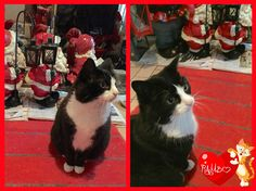 OMG OMG OMG!!!!! THE CAT SKIN IS IN THE HOUSE TOO!!!!! He´s looking after Santa!!!! WHAT????? Did you know all the cat skins are working for Santa??? Here´s the proof guys!!! Oh noooooo!!!!  Duncan and Dexter on D&D by Inger Johanne 12/2015 :)