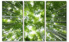 "Canvas drieluik schilderij boomtoppen bamboe bos ""Forest Roof"" Utility Pole, Plant Leaves, Canvas, Plants, Pictures, Art, Photo Art, Tela, Canvases"