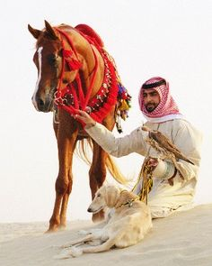 just a nomad and his horse, bird and saluki Arabian Horse Costume, Arabian Art, Horse Costumes, Arabian Horses, Lurcher, Horse Pictures, Horse Breeds, Whippet, Horse Art