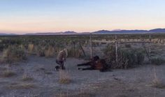 At least a dozen wild mustangs are dead after their water supply was cut off. Information about their deaths is being sought.