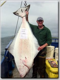 Halibut Fishing Kodiak.  You can get a lot of nice filets from this baby!
