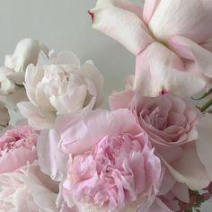 My Pretty Universe Colorful Flowers, Beautiful Flowers, Photo Instagram, Instagram Posts, Plum Pretty Sugar, Plants Are Friends, Bloom Blossom, Wattpad, Tropical Plants