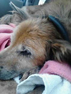 The Pictures Of This 16-year-old Dog Who Has Never Been Adopted Will blow your mind! Some dog lovers didn't stop at wishing but took action. Some amazing people built shelters, provided help, rescue and even homes for the dogs that are abused or homeless. I wish we could all do the same, and have a heart so big to even adopt one dog that is need of us. These dogs truly need you more than anything else in the world!