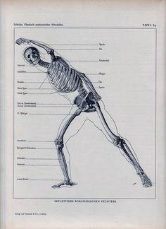 Original 1898 Anatomy Book Page Human Body Muscles Skeleton Anatomical Diagram Anatomy German Illustration Plate Antique Drawing Ephemera