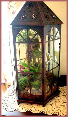 Wardian Case with Bromeliads