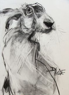 Valerie Davide hare >> Love this drawing! Animal Drawings, Art Drawings, Contour Drawings, Drawing Faces, Timberwolf, Rabbit Art, Rabbit Drawing, Rabbit Head, Bunny Art