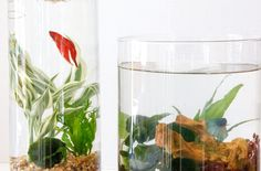 DIY: Indoor Water Garden | Tilly's Nest