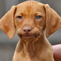 not amused puppy - Google Search